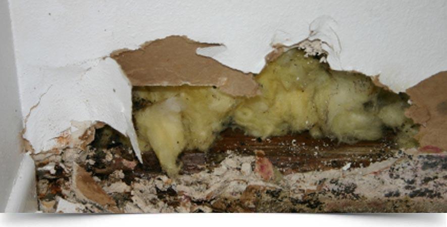 Slab Leak Detection Repair Services Albuquerque, NM